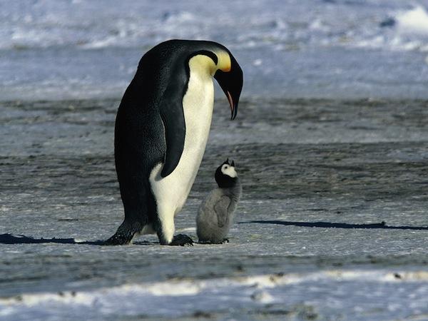 March-of-the-Penguins-Morgan-Freeman-Film-Still