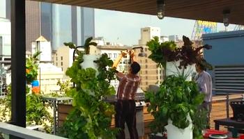Urban garden in DTLA