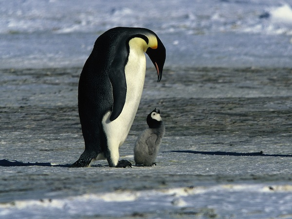 10 Lessons March Of The Penguins Taught Me About Success