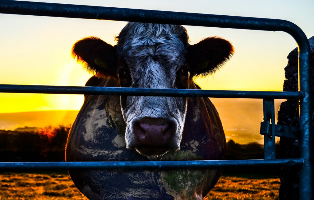Cowspiracy: The Sustainability Secret. Photo courtesy of the filmmakers.