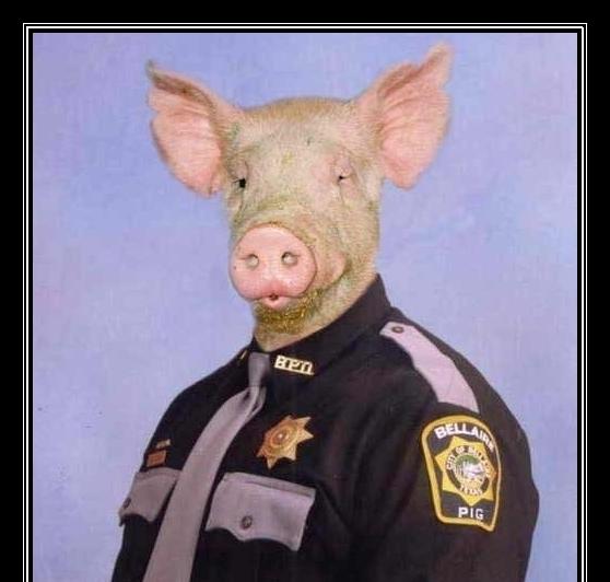 Image result for police pig images