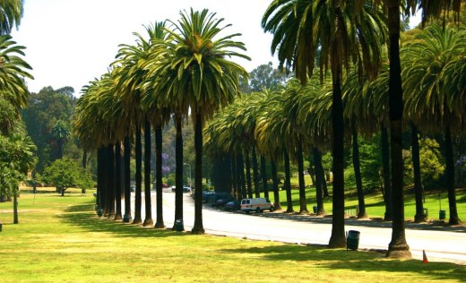 Avenue of the Palms,Elysian Park