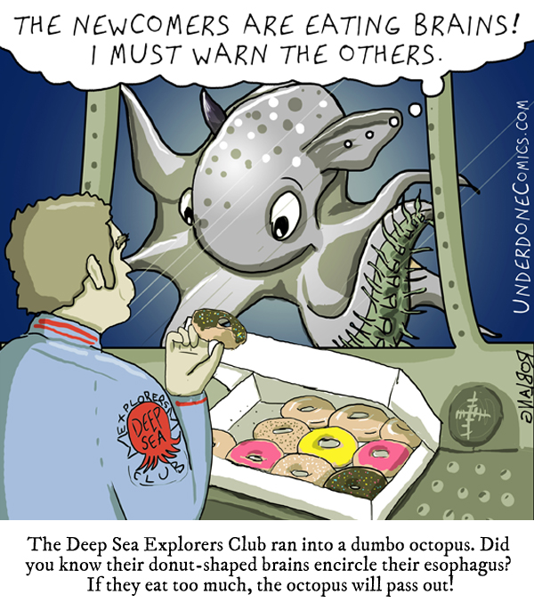 Underdone - Dumbo Octopus