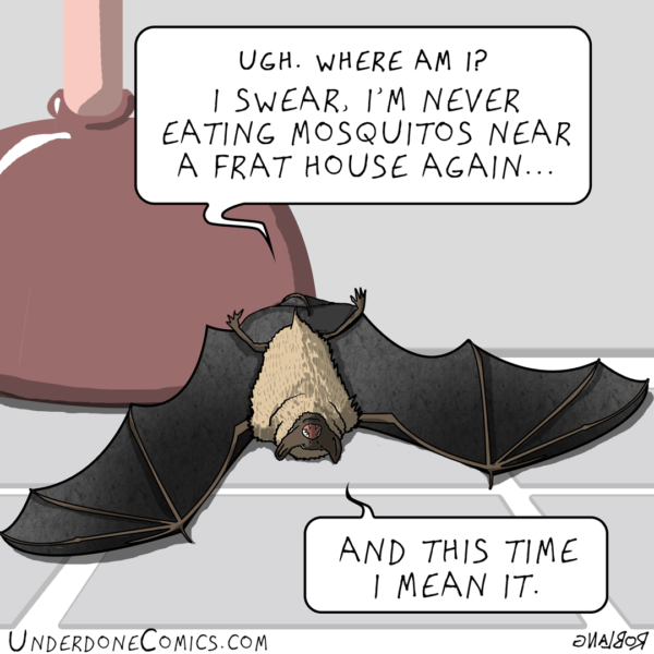 Did you know that one Little Brown Bat (Myotis lucifugus) can eat up to 1000 mosquitos in an hour? With a life span of 40 years, they're one of the longest-lived small mammals. Well this guy might not live that long if he keeps binging on those drunken skeeters!