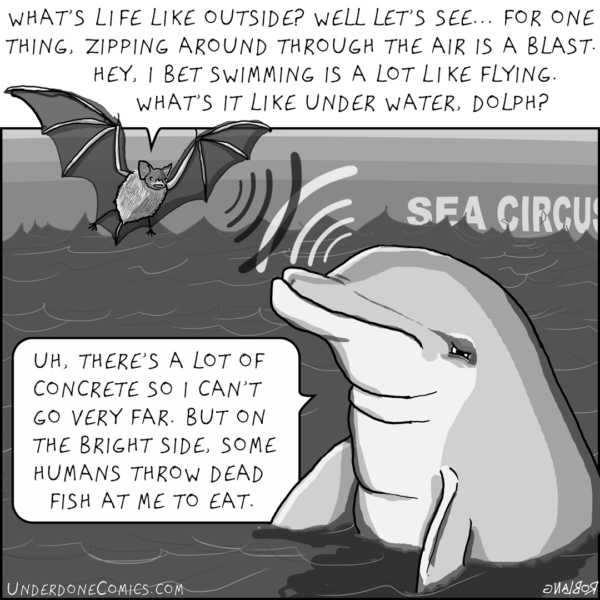 The bat visits the dolphin at night for a subsonic conversation.