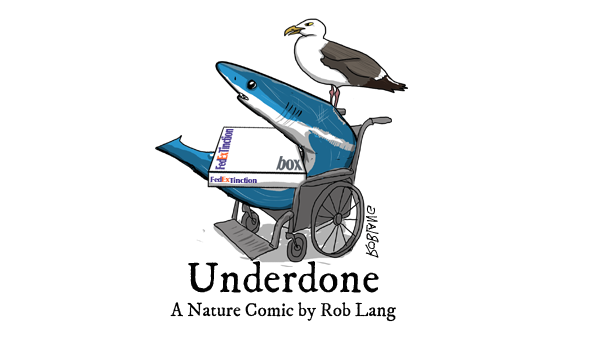 underdone-cw-header-finning