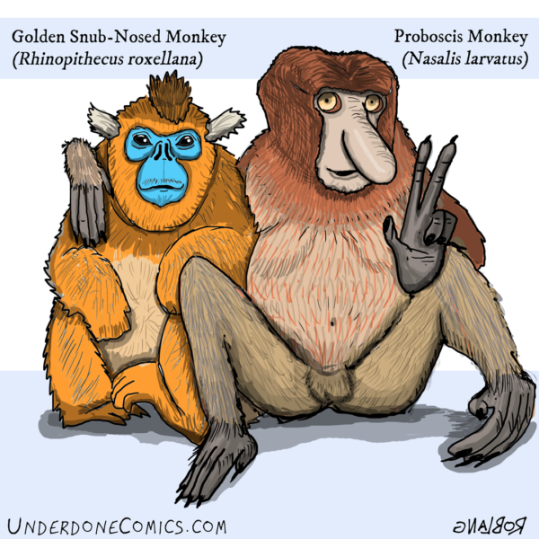 Old World Monkeys can be good friends, no matter how extreme their differences.