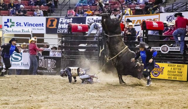 """David and Goliath"" in reverse in bull riding competition, Nile Rodeo, Montana, 2014"
