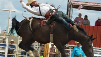 Always rolling the dice, always looking up, saddle bronch cowboy at the Crow Rodeo, Montana, 2015.