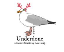 underdone-cw-header-holiday