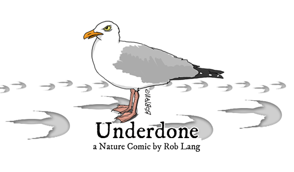 UNDERDONE-CW-header-cassowary