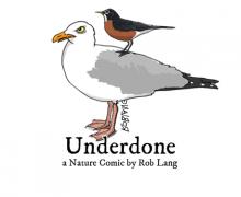 UNDERDONE-CW-header-robin