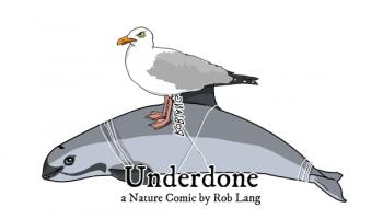 UNDERDONE-CW-header-vaquita