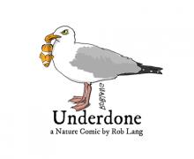 UNDERDONE-CW-header-aquarium