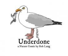 UNDERDONE-CW-header-baby-seaturtle