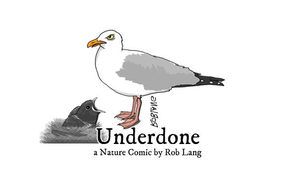 UNDERDONE-CW-header-nestling