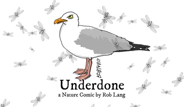 UNDERDONE-CW-header-bugs