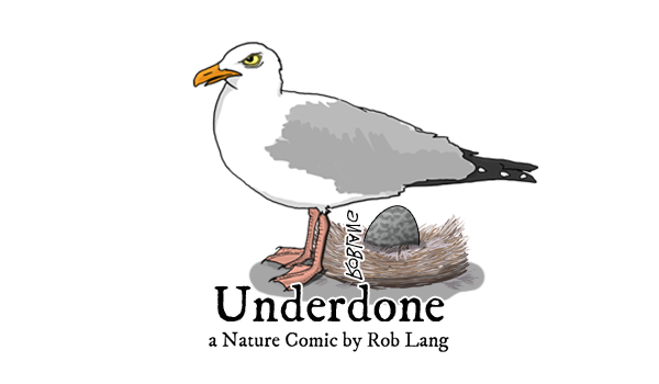 UNDERDONE-CW-header-mothersday-gull