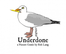 UNDERDONE-CW-header-office-pencil