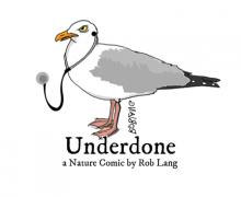 UNDERDONE-CW-header-doc