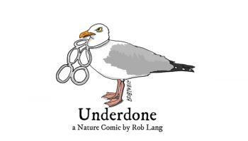 UNDERDONE-CW-header-plastic-rings