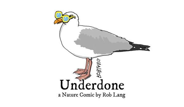 UNDERDONE-CW-header-summer