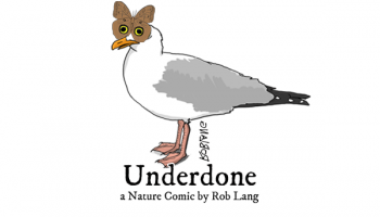 UNDERDONE-CW-header-owl-butterfly