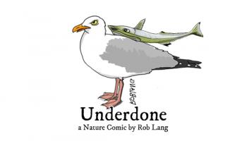 UNDERDONE-CW-header-remora