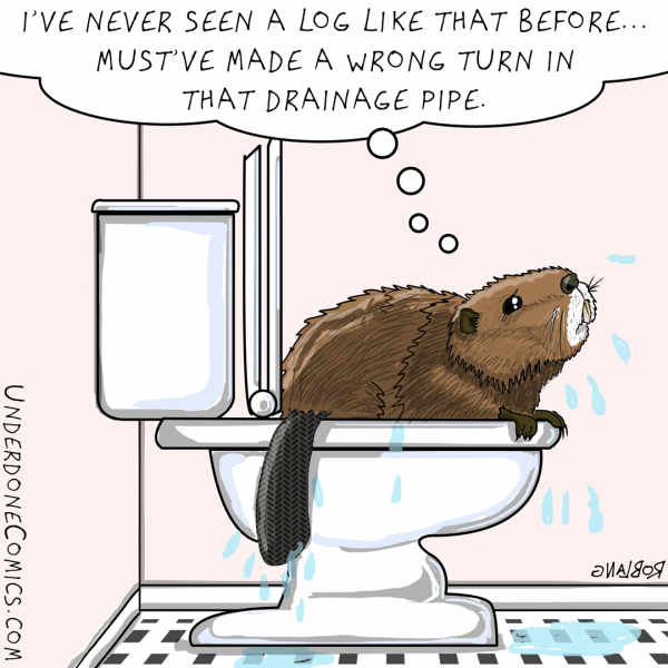 UNDERDONE beaver toilet