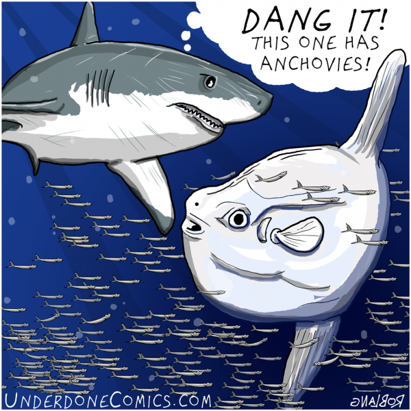 UNDERDONE shark eating sunfish