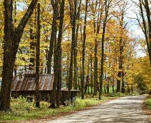 Fall Foliage Northeast Newark Autumn Vermont