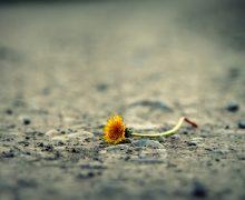 Sadness Alone Road Dandelion Life Flower Path