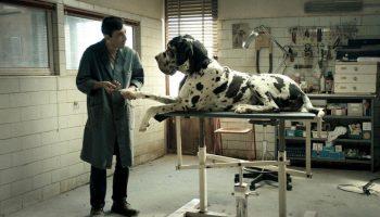 Dogman, Marcello Fonte