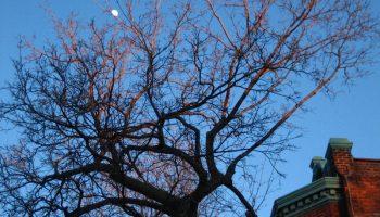 Tree crown under winter moon