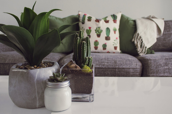 plants on table in house