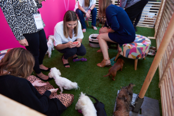 The Pet Collective offer a Puppy Powered Networking Space for Attendees (Credit Photo: IAB)