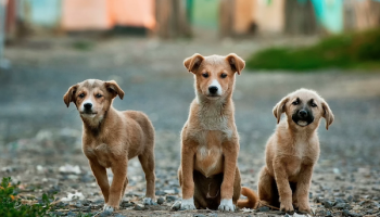 Three dogs. Photo by Anoir Chafik on Unsplash