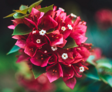 Tropical flowers. Photo by TheDailyFairy via Unsplash.