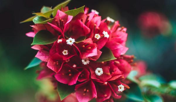 Tropical flowers. Photo by TheDailyFairy via Unsplash.