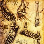 CW-A7-14376165-ancient-anatomical-drawings-made-by-leonardo-davinci-a-study-of-the-human-body