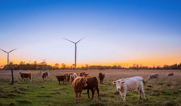 Cattle farm. Photo by Evi T. via Unsplash.